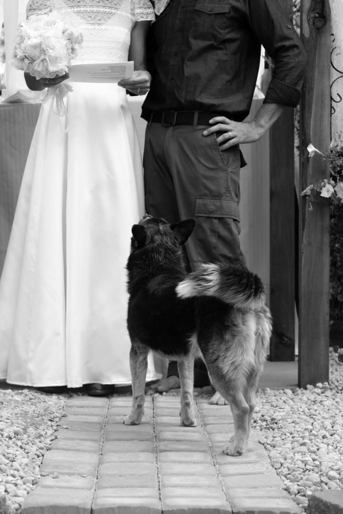 Dogs at Colorado Weddings