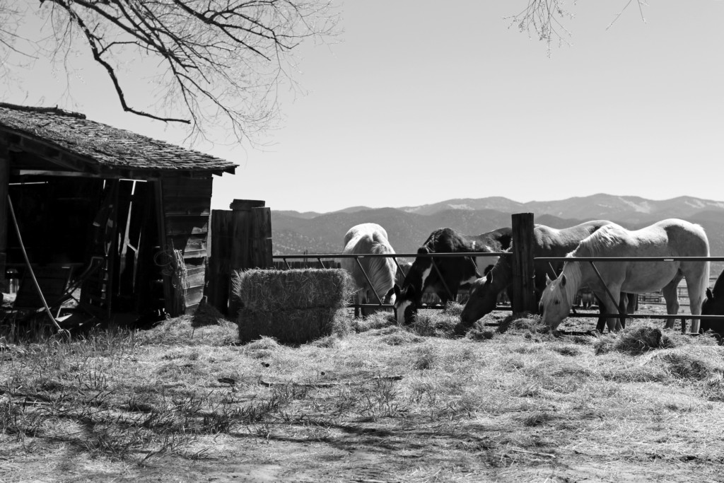 Chaffee County Farm